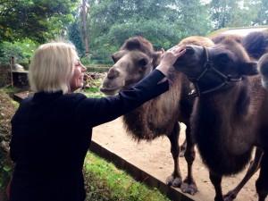 Drei Kamele